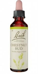 Bach Flower Chestnut Bud 20ml